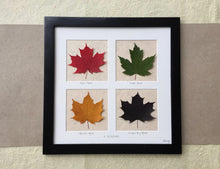 Pressed maple leaf picture art_4 seasons
