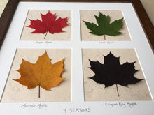 Real pressed maple leaf art framed; dried maple leaf art