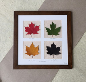 pressed botanical art framed_Maple leaf