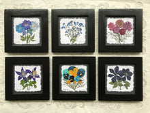 Dried Flowers; purple and blue pressed flower framed artwork 8x8; the art of preserving nature