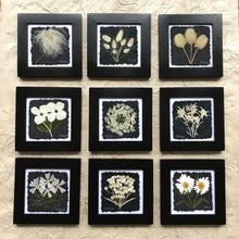 black and white 8x8 9 square. All real pressed flower framed art. musk mallow, daisy, edelweiss, queen annes lace, bunnytails, anemone, old man whiskers