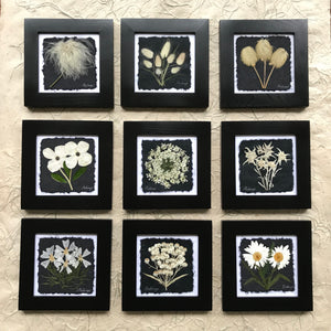 dried flowers; black and white collection; pressed floral arrangements behind glass