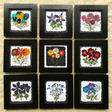 Dried Flower Artwork; colourful pressed flower set of 9 framed artwork; 8x8