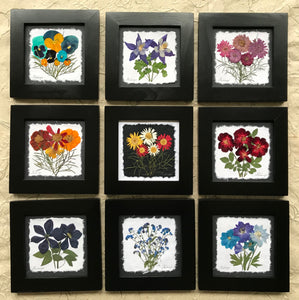 Dried Flowers; colourful pressed flower set of 9 framed artwork; handmade in Canada