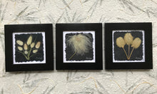 Dried Flower Artwork; Black and white set of 3; bunny tails old man whiskers, anemone. 8x8