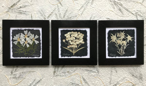 Dried flowers; mountain wild flower set of 3; bunnytails, old mans whiskers, anemone