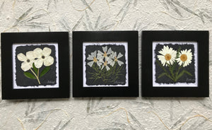 dried flowers; black and white set of 3 8x8; shasta daisy, musk mallow, dogwood