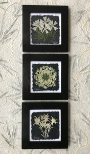 Black and white collection; set of 3 wildflowers pressed and framed