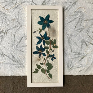 A pressed clematis stock and blue clematis flowers are arranged on white handmade paper and framed with a white handmade frame. The pressed botanical picture is 10x22 inches and is a handmade item by floral artist, Pressed Wishes