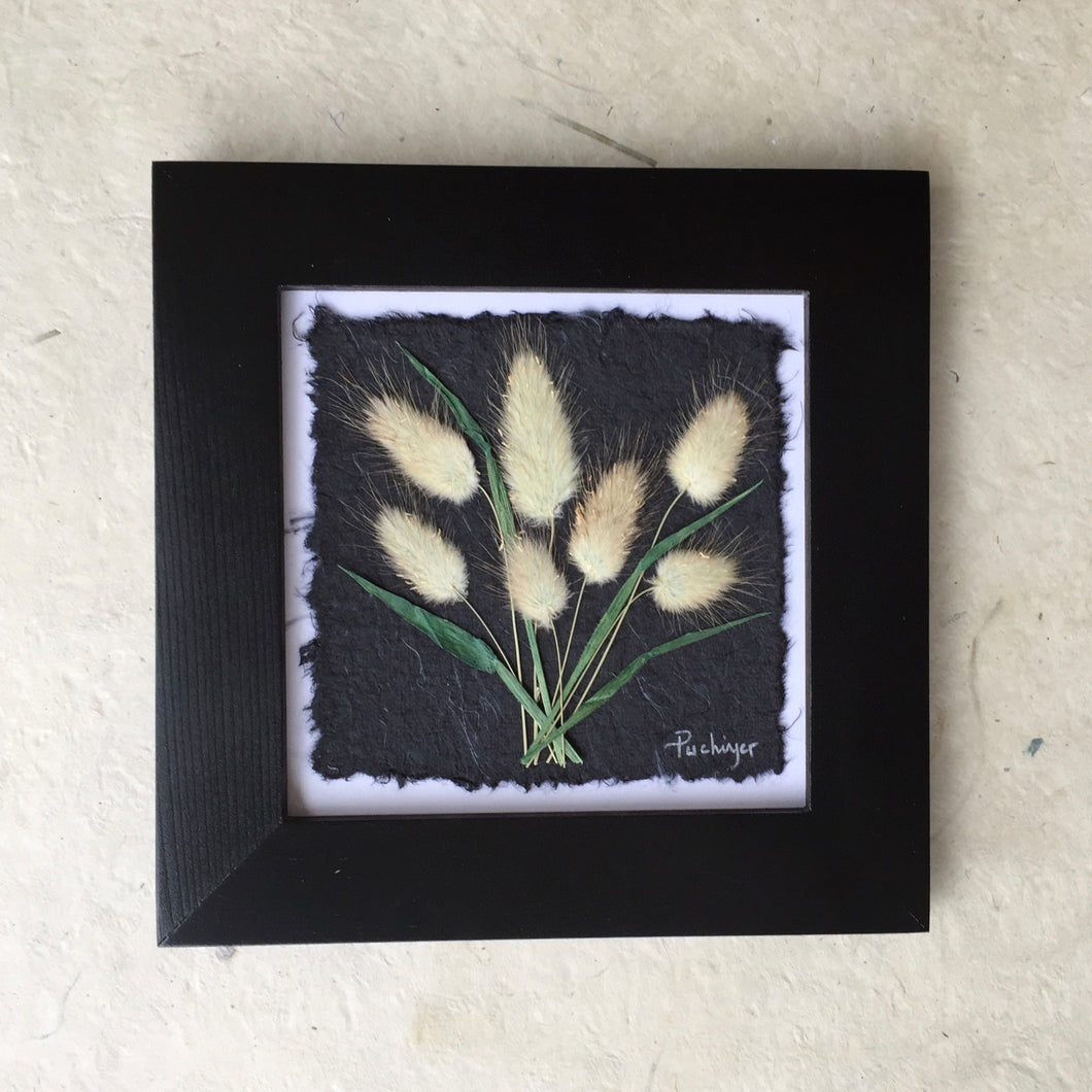 pressed bunny tail art with handmade paper and black frame; dried botanical artwork