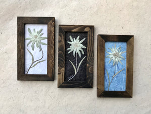 Group of Real Pressed Edelweiss Framed Picture by Pressed Wishes, Canadian Artist