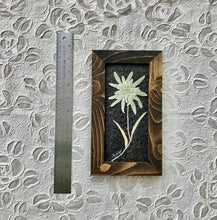 Real Pressed Edelweiss Framed Picture by Pressed Wishes, Canadian Artist, Dimensions