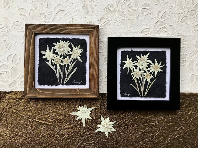Real pressed Edelweiss framed around by Pressed wishes