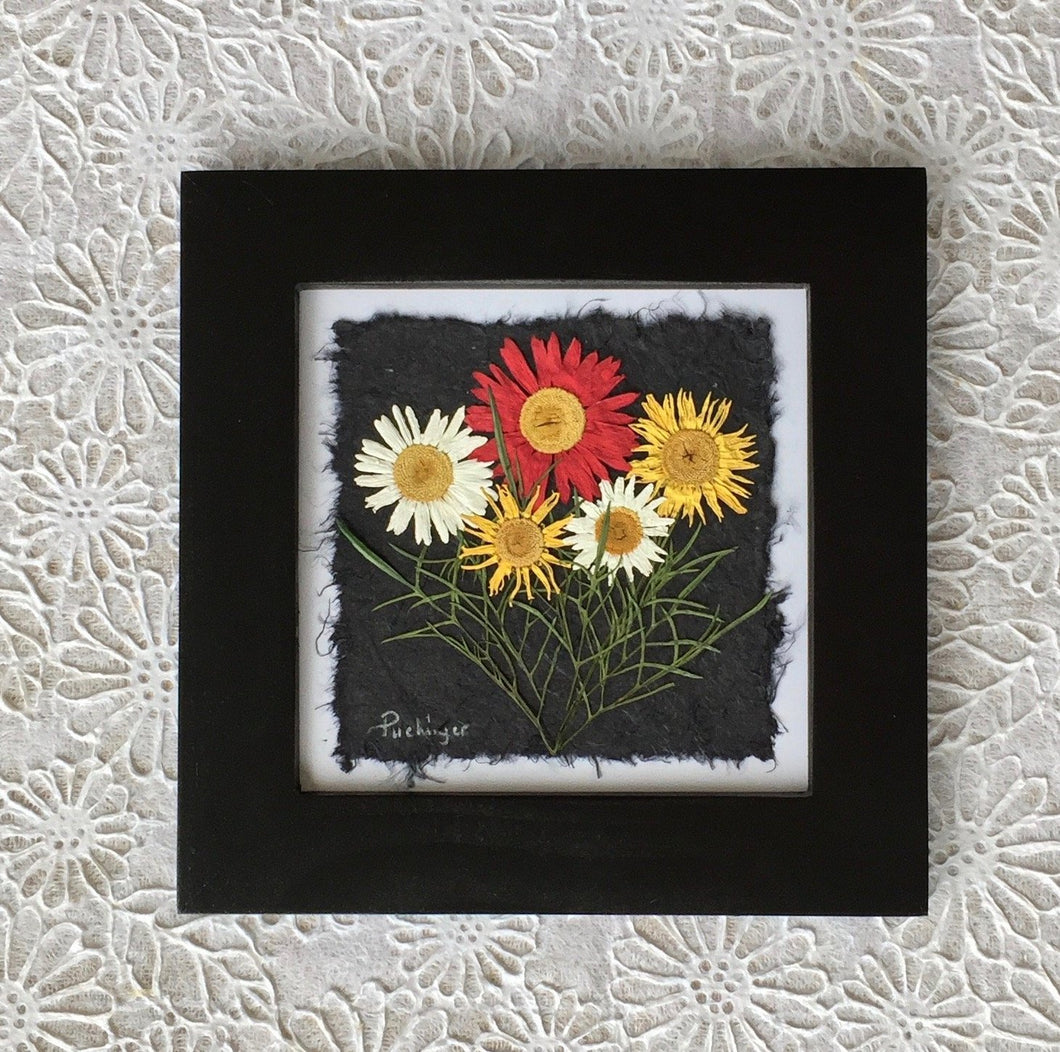 pressed flower artwork; Pressed multi colour daisy