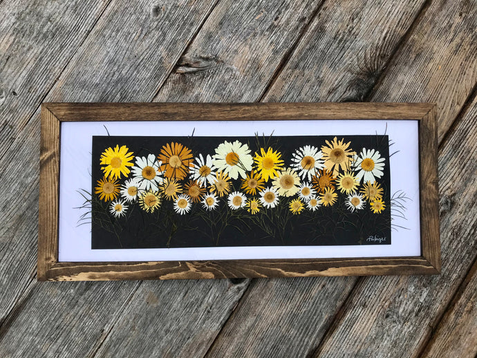 Daisy Panoramic 10x22