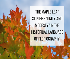 Maple Leaf Floriography Meaning - Pressed Wishes