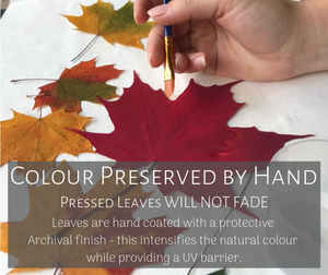 All maple leaves are hand dyed to ensure their color and vibrancy