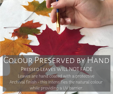 PRESSED WISHES uses archival varnish to preserve the natural beauty and colour of pressed maple leaves