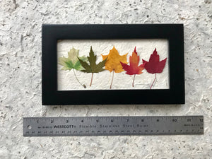Mini Rainbow Maple 6x10 Picture Dimensions - Real Pressed Maple Leaves made by Pressed Wishes