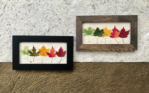 Mini Rainbow Maple 6x10 Picture - Real Pressed Maple Leaves made by Pressed Wishes - Black and Walnut