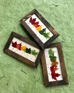 Mini Rainbow Maple 6x10 Picture - Real Pressed Maple Leaves made by Pressed Wishes -