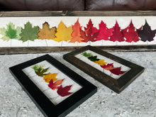 Mini Rainbow Maple 6x10 Picture - Real Pressed Maple Leaves made by Pressed Wishes - Size Comparison with Skinny Picture