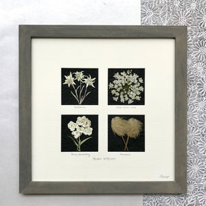 mountain wildflower 4 square with edelweiss queen annes lace dogwood and anemone