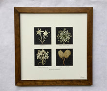 Perfect Wedding Gift! pressed mountain wildflowers with brown frame