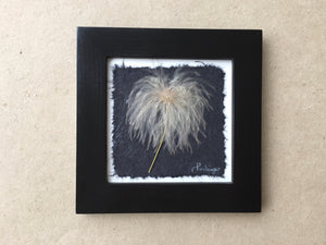 Dried Botanicals; pressed old man whiskers with black frame_pressed botanical art