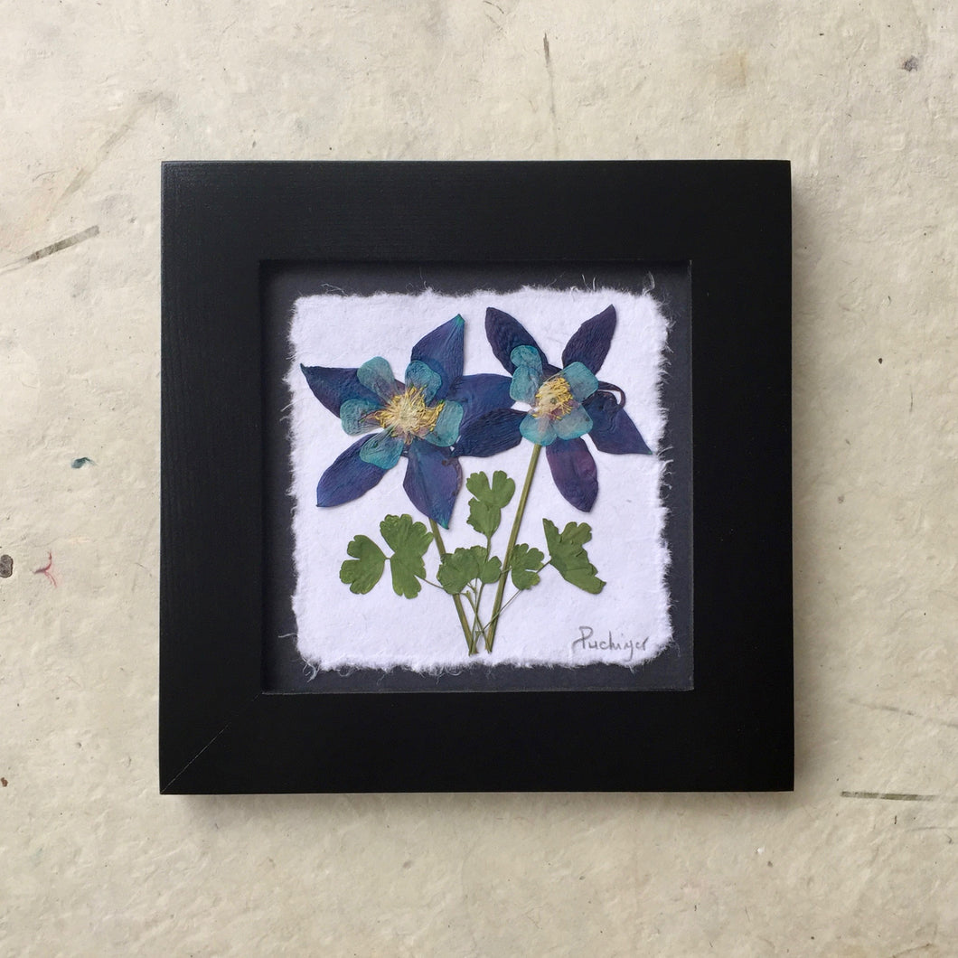 handmade pressed columbine art for sale