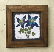 Dried Flowers; artisan made pressed columbine on handmade paper_walnut frame