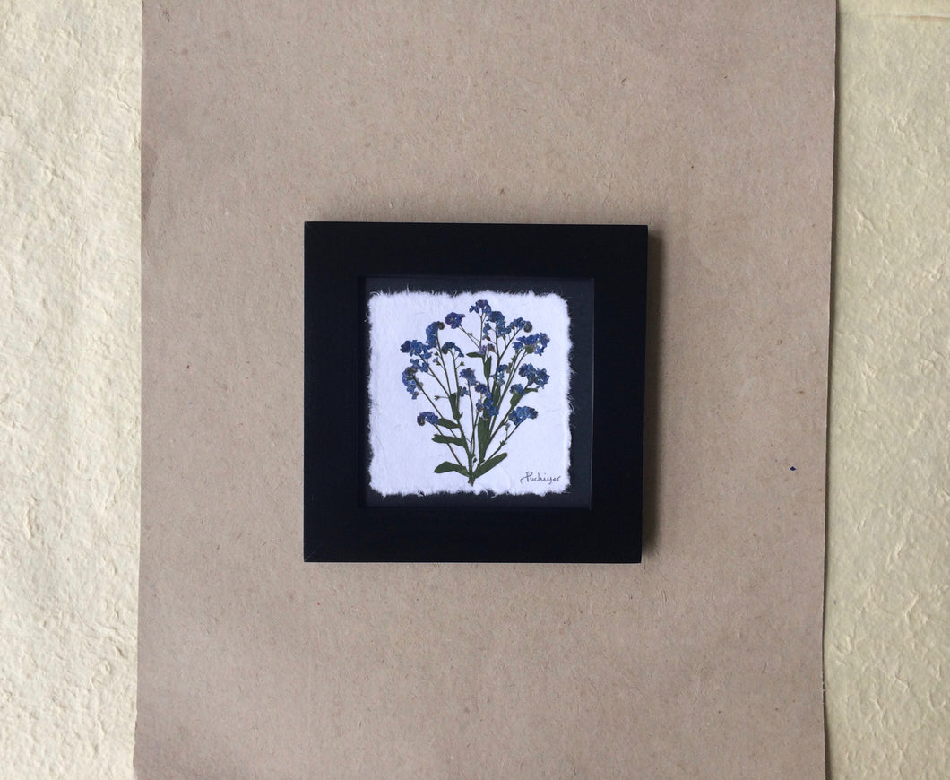Dried Forget me not; pressed forget me not framed art with black frame