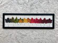 Rainbow Maple; Pressed maple leaf framed artwork with handmade paper and solid wood frame