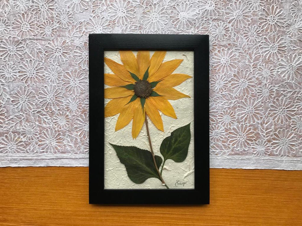 Real Pressed Yellow Sunflower Framed Artwork by Canadian botanical artist, Pressed Wishes