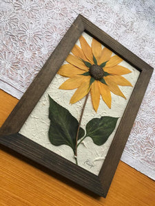 Real Pressed Sunflower Framed picture by Pressed Wishes