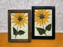 Real Pressed Sunflower Framed Artwork by Pressed Wishes, Canadian botanical artist