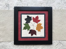 the tattoo - pressed maple leaf framed artwork with red handmade paper and black frame