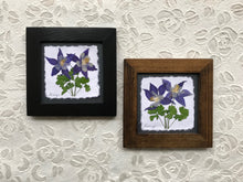 Dried Flowers; pressed columbine framed artwork made in the mountains of Canada