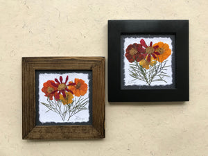 Dried Flowers; Pressed Cosmos framed artwork available in black and walnut frame