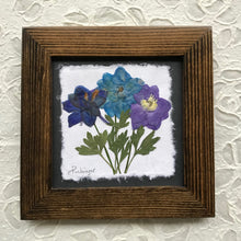 Dried Flowers; pressed delphinium 8x8 framed artwork with walnut frame