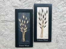 7x16 Ancient Einkorn Wheat  'Prosperity & Wealth'