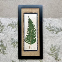 Real pressed sword fern framed artwork with handmade paper and black frame