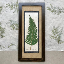 real pressed sword fern framed artwork; means health and confidence in floriography