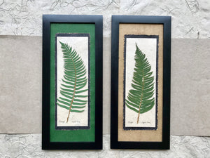 dried ferns. pressed sword fern framed artwork with handmade paper and black frame