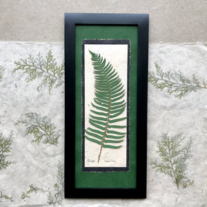 real pressed sword fern framed artwork with green handmade paper and a black frame