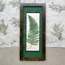 dried ferns; real dried fern framed artwork; ferns signify health and confidence in floriography