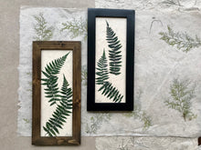real pressed fern framed artwork available in black and walnut frame; Dried ferns