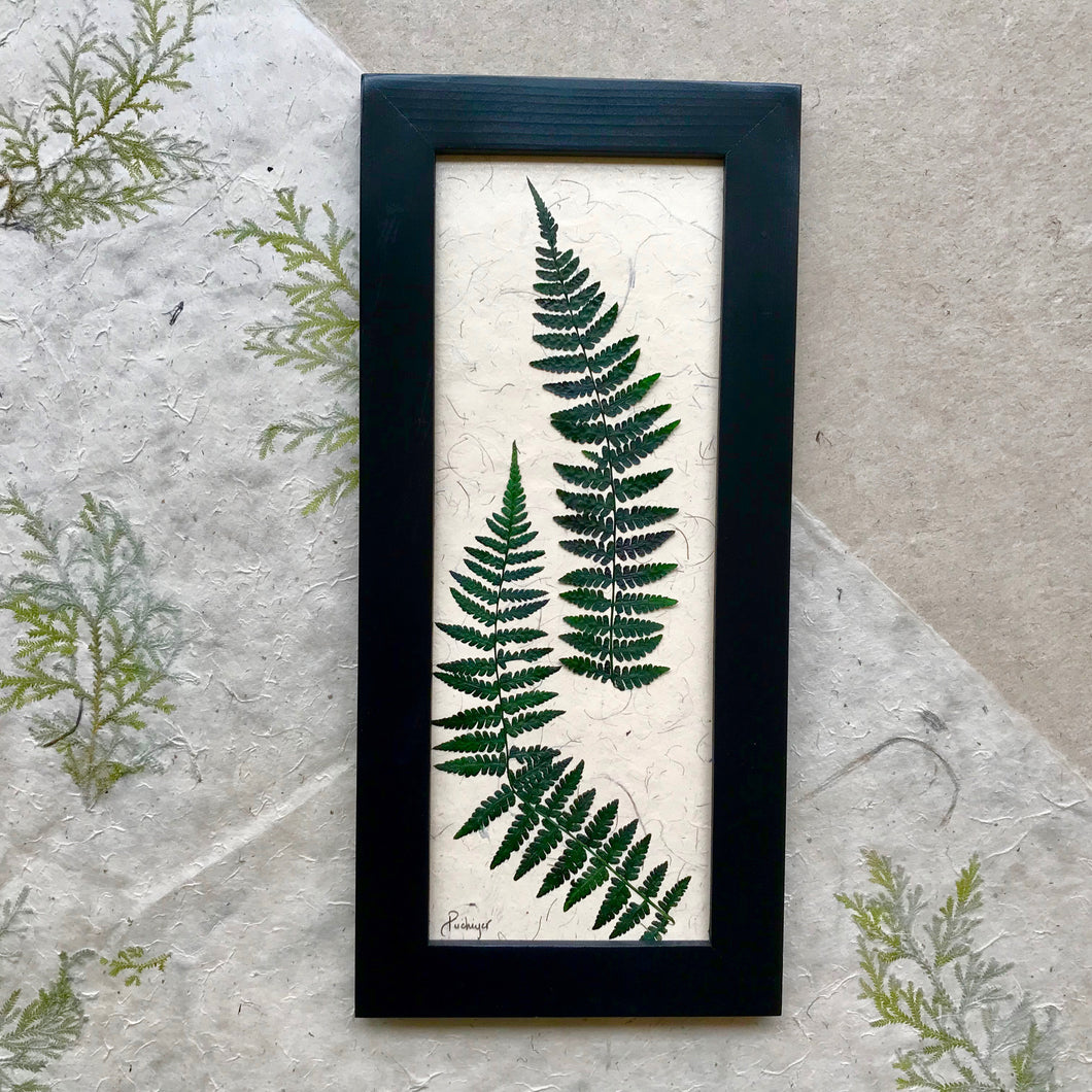 real pressed fern framed artwork with black frame; signifies health and confidence