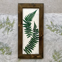 Dried Fern Artwork; real pressed fern framed artwork with walnut frame and handmade paper