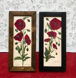 pressed flanders poppy framed artwork; perfect gift for veterans